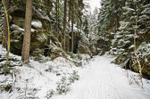 Road in the forest during the winter — Stock Photo