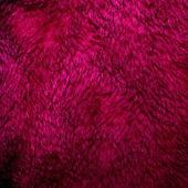 Purple fur texture — Stock Photo