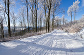 Road in forest during the winter — Stock Photo
