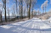 Straße in wald im winter — Stockfoto