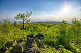 Spring landscape with fresh green forest — Stockfoto