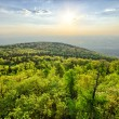 Spring landscape with fresh green forest — Stock Photo