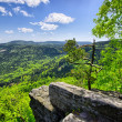 Spring view on the forest and fields — Stock Photo