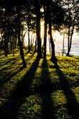 在日落期间波罗的海岸 — 图库照片