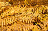 Background with yellow ferns — Stock Photo