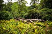 Tiergarten park in Berlin, Germany — Stock Photo