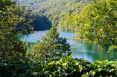 Lake in the forest — Stock Photo