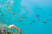A lot of fishes in Plitvice park, Croatia — Stockfoto