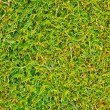 Stock Photo: Coniferous texture