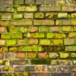 Stock Photo: Old mossy wall