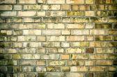Gamla mossiga väggen — Stockfoto