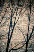 Branches shadows on the brick wall — Stockfoto