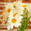 Camomile — Stock Photo #30606467