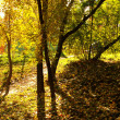 Autumn forest with sun beam — Stock Photo #32770417