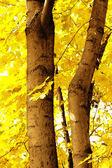 Floresta de outono com raio de sol — Fotografia Stock
