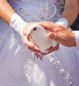 White pigeons in the hands of the newlyweds — Stock Photo