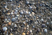 Beach made of Sea Shells — Stock Photo