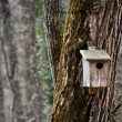 Bird Wooden House in the Forest — Stock Photo