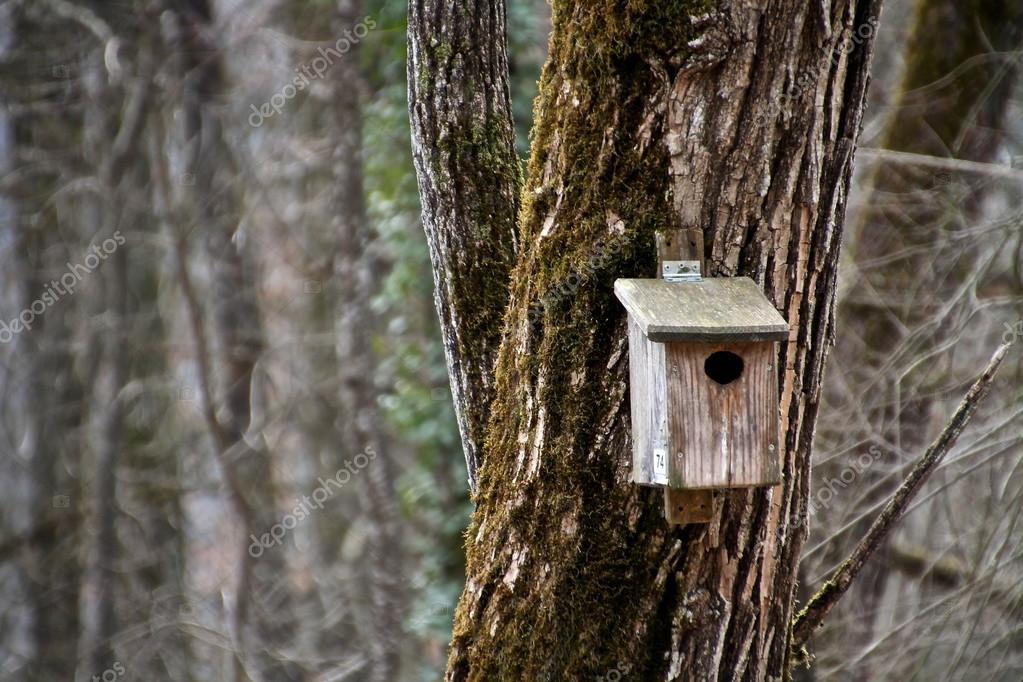 在树林里的一棵树上的木制鸟屋– 图库图片