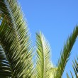 Palm leaves against a blue summer sky — Stock Photo #27810383