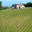 Stock Photo: Vineyard on hill