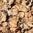 Dry leaves autumn background — Stock Photo