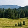 Pine Tree Forrest in the Montains — Stock Photo #21596341