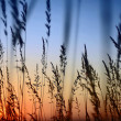 Sunset Landscape Scene With Tall Grass — Stock Photo