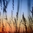 Stock Photo: Sunset Landscape Scene With Tall Grass