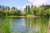 Landscape with a lake — Stockfoto