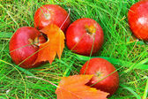 Fallen red apples in green grass. — Stock Photo