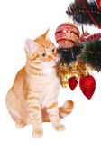 Red cat near the Christmas tree branches — Foto Stock