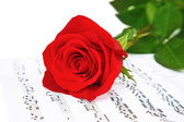 Rose and music sheets, isolated on white — Stock Photo