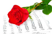 Rose and music sheets — Stock Photo