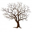 Tree without leaves isolated on white — Stock Vector #49553431