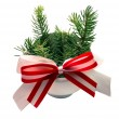 Fir-tree - Stock Photo