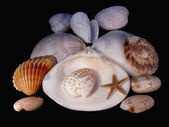 Lodges of mollusks — Stock Photo