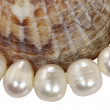 Macro necklace from pearls and mollusk shell on white backgr — Stock Photo #21919031