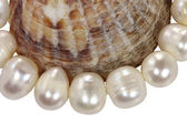 Macro necklace from pearls and a mollusk shell on a white backgr — Stock Photo