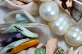 Pearls and cockleshells — Stock Photo