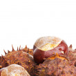 Stock Photo: Chestnuts with room for text