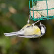 Tomtit with fodder — Stock Photo