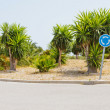 Traffic circle with palms — Stok fotoğraf