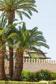 Vieux château avec palmes — Photo