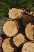 Logs, Urkiola, Bizkaia, Basque Country, Spain — Stock Photo