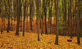 Autumn forest with yellow leaves on the ground — Stock Photo