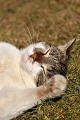 Sleeping tabby kitten in the garden — Stock Photo