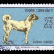 Stock Photo: Turkish Sivas Kangal Dog