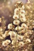 Deflorate wild flower — Stock Photo