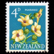 New Zealand hibiscus, Puarangi - Stock Photo